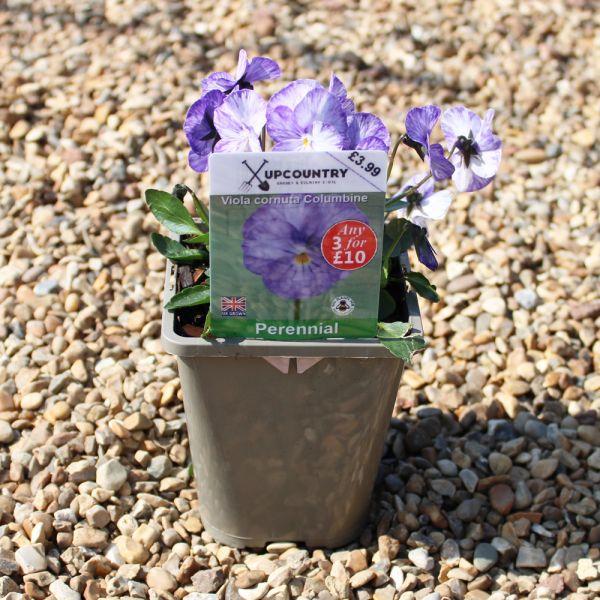 Seasonal Herbaceous Plant Mix - 1lt