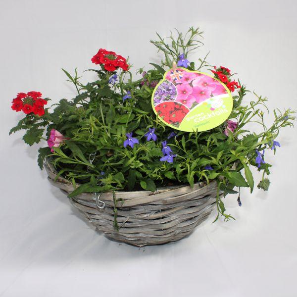 Garden Cocktail Hanging Basket 12