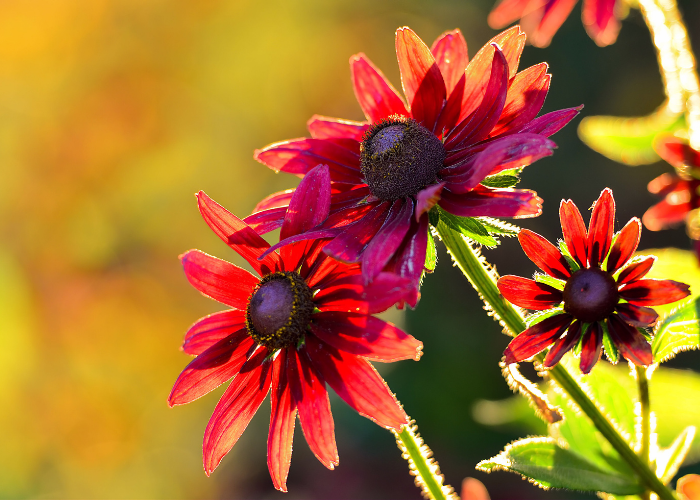 Our August gardening guide!