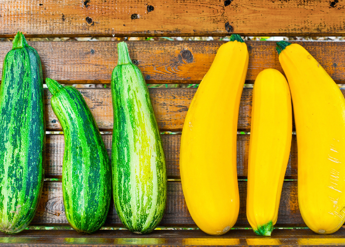 Join our 2021 Marrow Growing Competition!