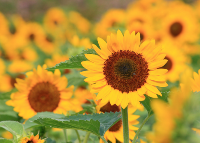 Our July Gardening Guide!